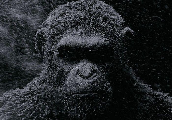 Planeta do Macaco: A Guerra