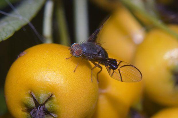 5 dicas e truques para afastar moscas de frutas da cozinha